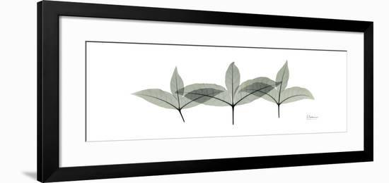 Caffir Palm Tree Portrait-Albert Koetsier-Framed Art Print