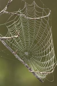 Morning dew on a spider web. by Cagan H. Sekercioglu