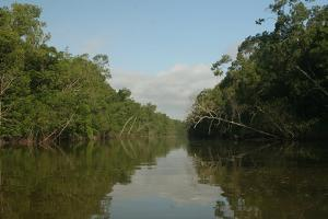 A Scenic View of a Coastal Mangrove Swamp in Northern Venezuela by Cagan Sekercioglu