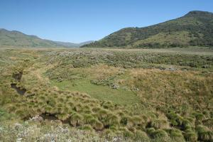 A View of Alpine Grasslands in the Bale Mountains National Park by Cagan Sekercioglu