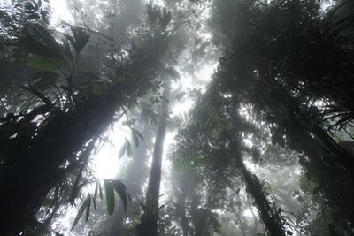 Sunlight Filters Through the Canopy in the Darien Rainforest, Panama by Cagan Sekercioglu