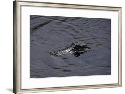 Caiman--Framed Giclee Print