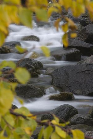 Cascading River Through Autumnal Foliage, Sarek Np, Laponia World Heritage Site, Lapland, Sweden
