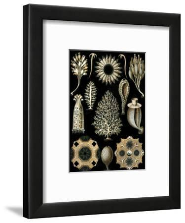 Calcispongiae-Ernst Haeckel-Framed Art Print