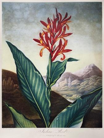 Thornton: Indian Reed