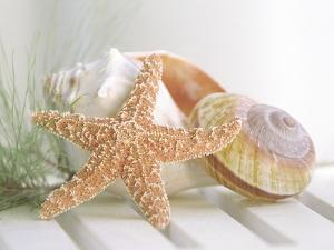 Cali Starfish II