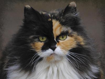 Calico Cat Portrait-Jai Johnson-Giclee Print