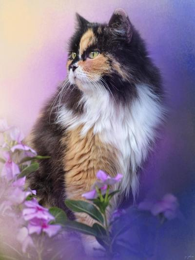 Calico Kitty in the Garden-Jai Johnson-Giclee Print