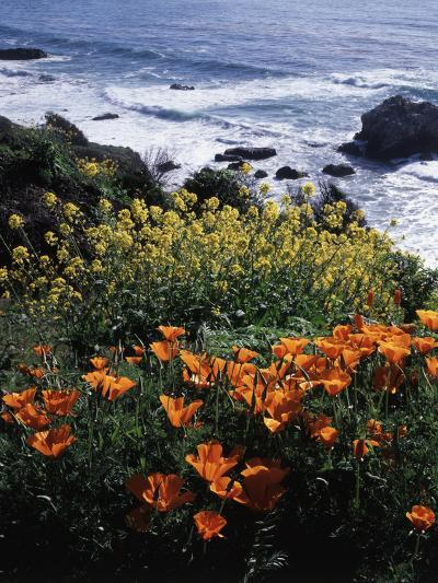 California, Big Sur Coast, Central Coast, California Poppy and Ocean-Christopher Talbot Frank-Photographic Print