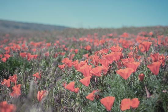 California Blooms I-Elizabeth Urquhart-Photographic Print