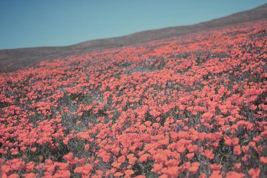 California Blooms III-Elizabeth Urquhart-Photographic Print