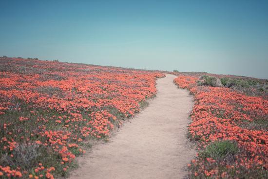 California Blooms IV-Elizabeth Urquhart-Photographic Print