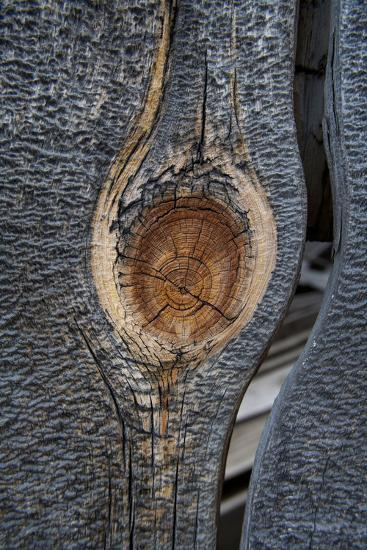 California, Bodie State Park. Weathered Tree Knot-Jaynes Gallery-Photographic Print