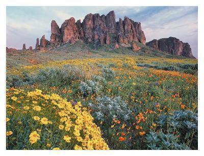 California Brittlebush Lost Dutchman State Park, Superstition Mountains, Arizona-Tim Fitzharris-Art Print