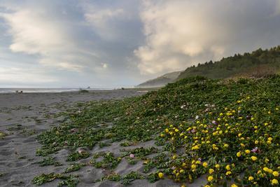 California Coast-wollertz-Photographic Print