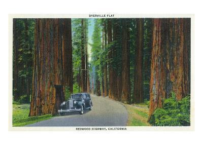 California - Dyerville Flat Scene on the Redwood Highway-Lantern Press-Art Print