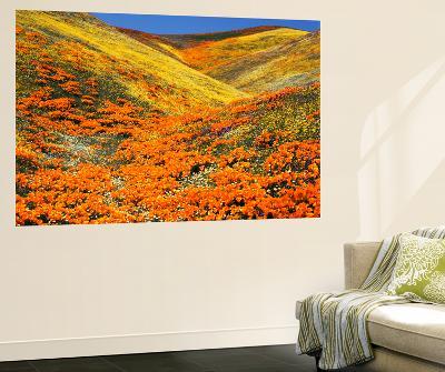 California Golden Poppy Flower at Tehachapi Mountains, California, USA-Stuart Westmorland-Wall Mural
