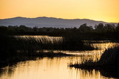 https://imgc.artprintimages.com/img/print/california-gray-lodge-waterfowl-management-area-at-butte-sink_u-l-pyp2jw0.jpg?p=0