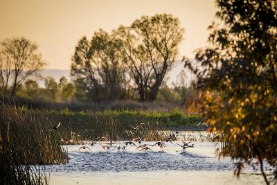 California, Gray Lodge Waterfowl Management Area, at Butte Sink-Alison Jones-Photographic Print