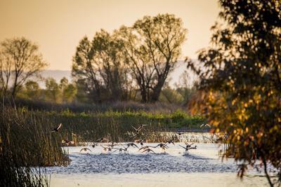 https://imgc.artprintimages.com/img/print/california-gray-lodge-waterfowl-management-area-at-butte-sink_u-l-pyqxc80.jpg?p=0