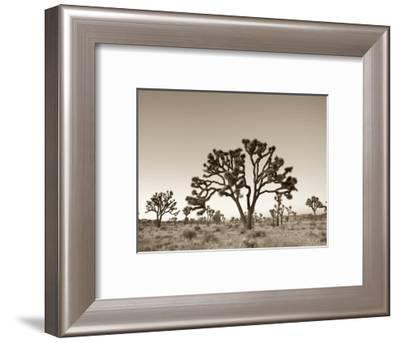 California, Joshua Tree National Park, Joshua Trees, USA-Michele Falzone-Framed Photographic Print