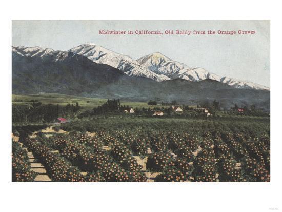 California - Orange Groves with Old Baldy Mt in Distance-Lantern Press-Art Print