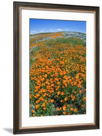 California Poppies, Antelope Valley, California, USA-Russ Bishop-Framed Premium Photographic Print