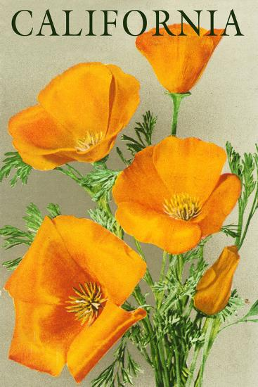 California - Poppies-Lantern Press-Art Print