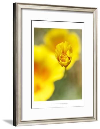 California Poppy III-Jonathan Nourock-Framed Art Print
