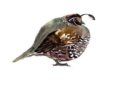 https://imgc.artprintimages.com/img/print/california-quail_u-l-f9jrlu0.jpg?p=0