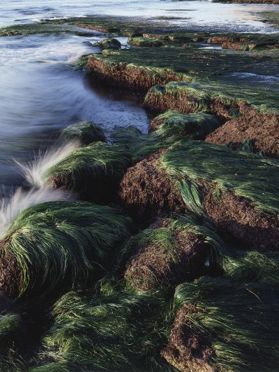 California, San Diego, Waves Crash on Eel Grass Covered Rocks-Christopher Talbot Frank-Photographic Print