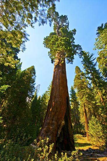 California, Sequoia, Kings Canyon National Park, General Grant Tree-Bernard Friel-Photographic Print