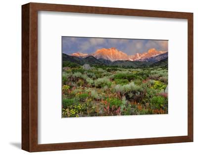 California, Sierra Nevada Mountains. Wildflowers Bloom in Valley-Jaynes Gallery-Framed Photographic Print