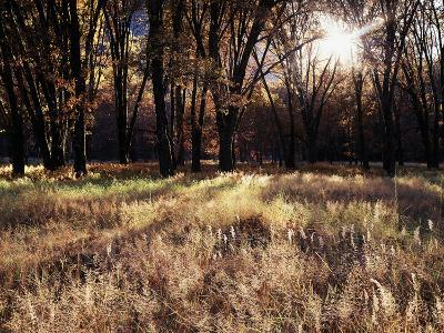 California, Sierra Nevada, Yosemite National Park, the Sunset over Fall Forest-Christopher Talbot Frank-Photographic Print