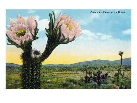 California - View of a Flowering Cactus-Lantern Press-Art Print