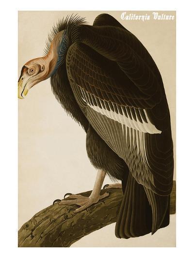 California Vulture-John James Audubon-Art Print