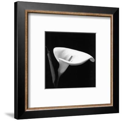Calla III--Framed Art Print