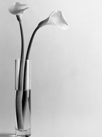 Calla Lilies in Vase-Howard Sokol-Photographic Print