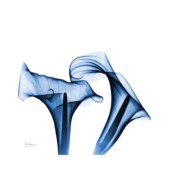 Calla Lilies Indigo-Albert Koetsier-Premium Giclee Print