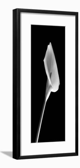Calla Lilies on Black I-Robert Jones-Framed Photographic Print