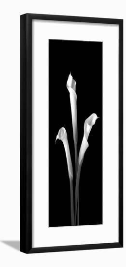Calla Lilies on Black II-Robert Jones-Framed Photographic Print