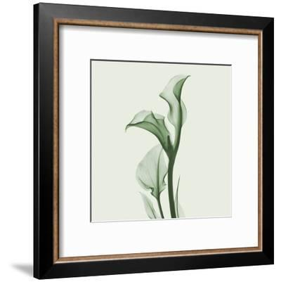 Calla Lilly in Green-Albert Koetsier-Framed Art Print