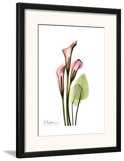 Calla Lily Bouquet in Pink-Albert Koetsier-Framed Art Print