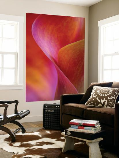 Calla Lily Curves I-Doug Chinnery-Wall Mural