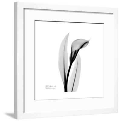 Calla Lily Gray 3-Albert Koetsier-Framed Art Print