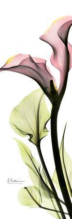 https://imgc.artprintimages.com/img/print/calla-lily-in-color_u-l-f547vf0.jpg?p=0