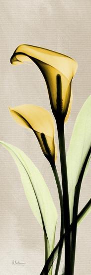 Calla Lily Moment-Albert Koetsier-Art Print