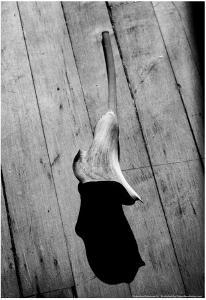 Calla Lily on Wooden Floor
