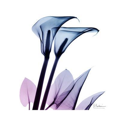 Calla Lily Purp-Albert Koetsier-Art Print