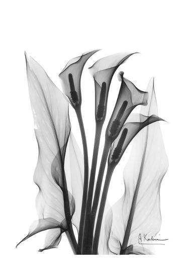 Calla Lily Quad In Black And White Art Print By Albert Koetsier